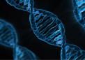 来自多人群数据的多基因风险评分可以改善IBD预测