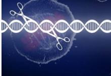 科学家发现与儿童罕见遗传病相关的分子缺陷