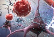 研究澄清了衰老对造血干细胞的影响