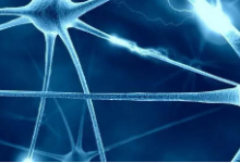 研究人员创建了描述不同类型神经元的分子目录