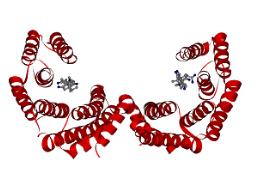 科学家开发出增强型的光毒性蛋白