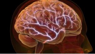 新的大脑活动模型可以为改进的人工智能系统的设计提供参考