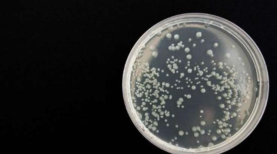 科学家将有毒农药转化为抗药性细菌的治疗