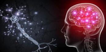 发现揭示了一种新型的脑细胞 对物体的距离和方向敏感