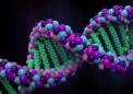 对染色质物理性质的新理解可能表明基因组是如何编码和解码的