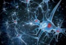 干细胞工程用于鉴定与精神分裂症有关的基因信号通路
