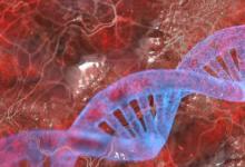 DNA的功能是存储生物体发展功能和繁殖所需的所有遗传信息